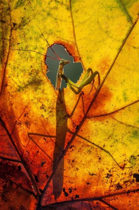 """""""Na janela, admirando o outono"""": fotografia para a National Geographic (Foto: Alberto Di Donato)"""